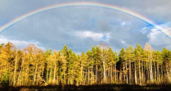 Stille Beisetzung, Regenbogen, CR Trauerredner, Carsten Riedel, Trauerredner