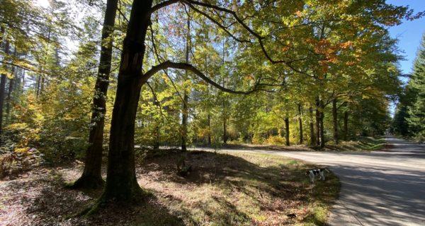 Gruppenseminar Trauerredner Werden - Beispielbild Herbstlandschaft
